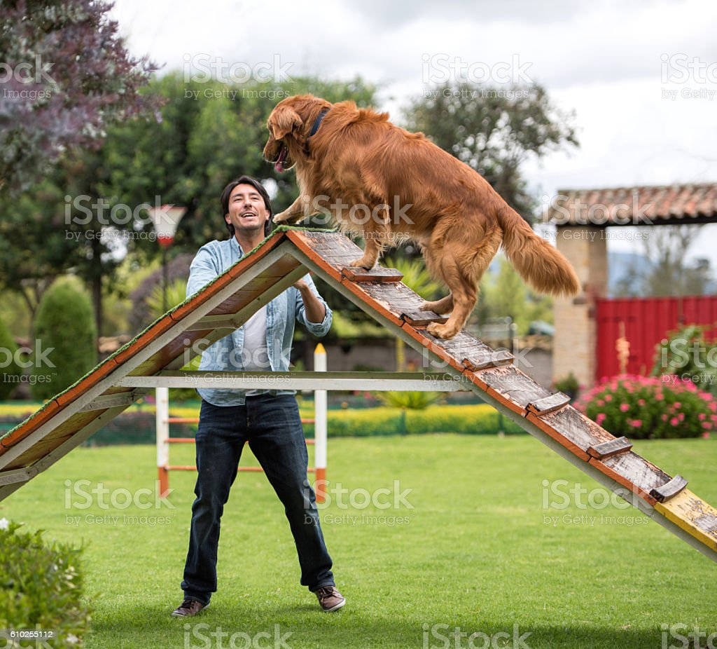 Happy man with a dog at the park stock photo