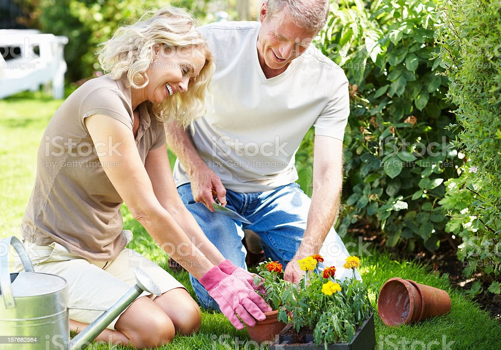 Happy mature couple working together in their garden royalty-free stock photo