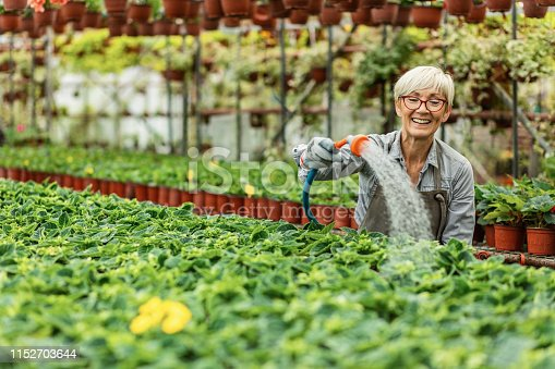 Happy female gardener watering potted flowers with garden hose in plant nursery.