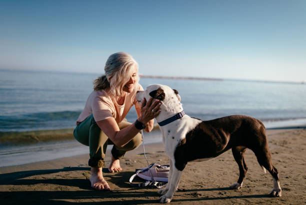 Happy mature woman petting dog on the beach in summer stock photo