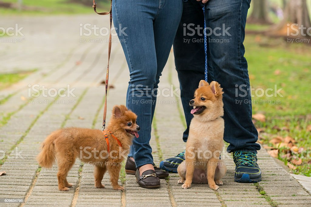 happy Mixed Race Couple with Pomeranian stok fotoğrafı
