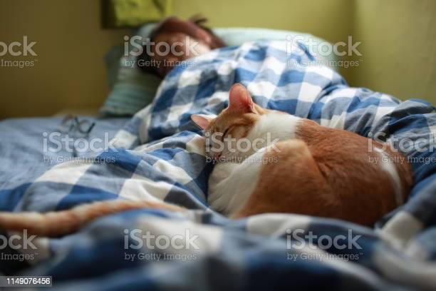 Happy moment of cat and human picture id1149076456?b=1&k=6&m=1149076456&s=612x612&h=0oeg6sraq6ck u5u0vqv8m3skzhgusvqtmfohf 4apc=