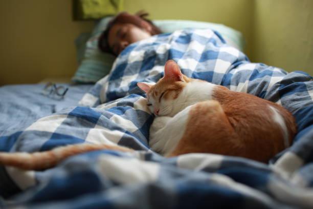 Happy moment of cat and human picture id1149076456?b=1&k=6&m=1149076456&s=612x612&w=0&h=ounyaxw9m30f5khjzvjpv dxw5ccy29e8qaxw0oww8e=