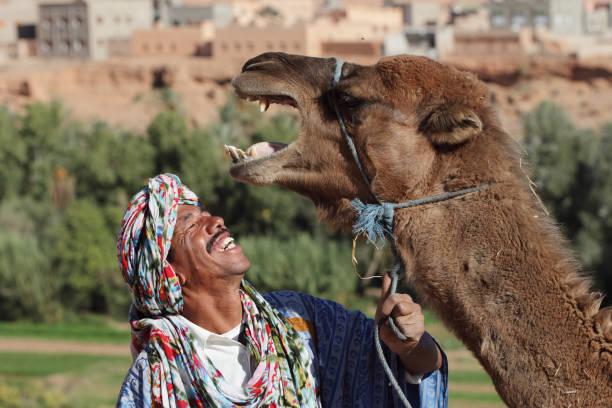 Happy Moroccon Berber and His Happy Camel – zdjęcie