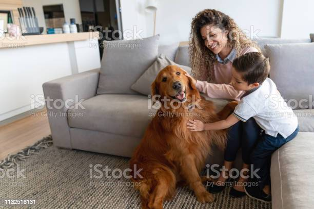 Happy mother and son at home petting their dog picture id1132516131?b=1&k=6&m=1132516131&s=612x612&h=2klkhcuystkv elwu wabiziawbwoxvhzt7x7dmsvio=