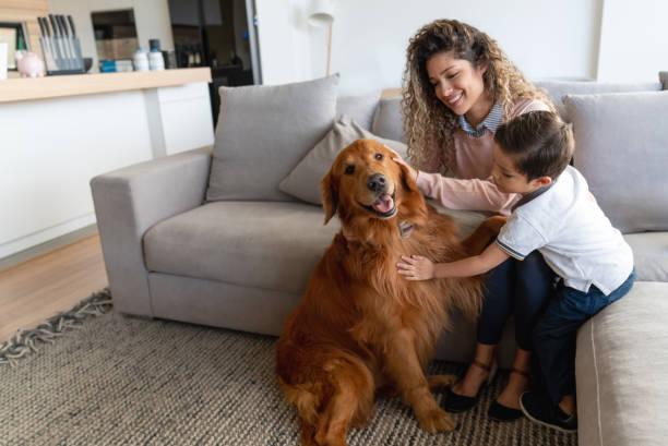 feliz madre e hijo en casa acariciando su perro - mascota fotografías e imágenes de stock