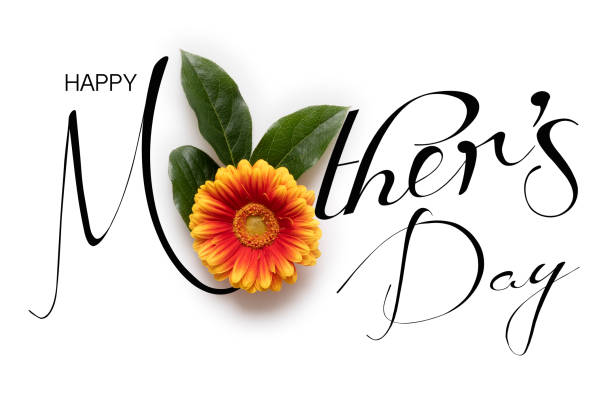 happy mother's day background. flat lay greeting card with beautiful gerbera flowers on white background. - mothers day stock pictures, royalty-free photos & images