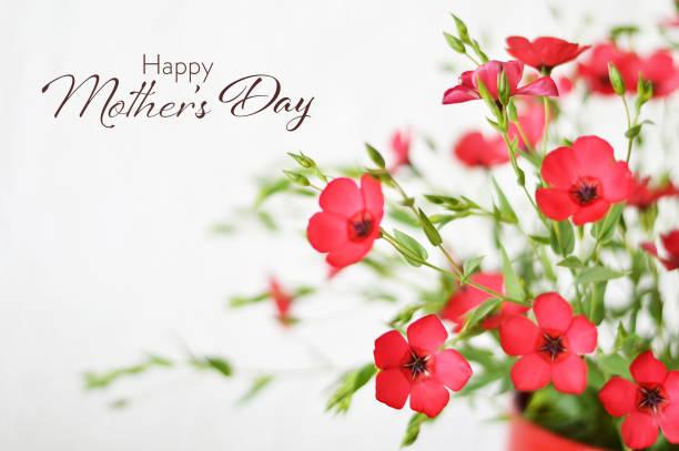 Glückliche Mütter Tageskarte mit Bündel von roten Blumen – Foto