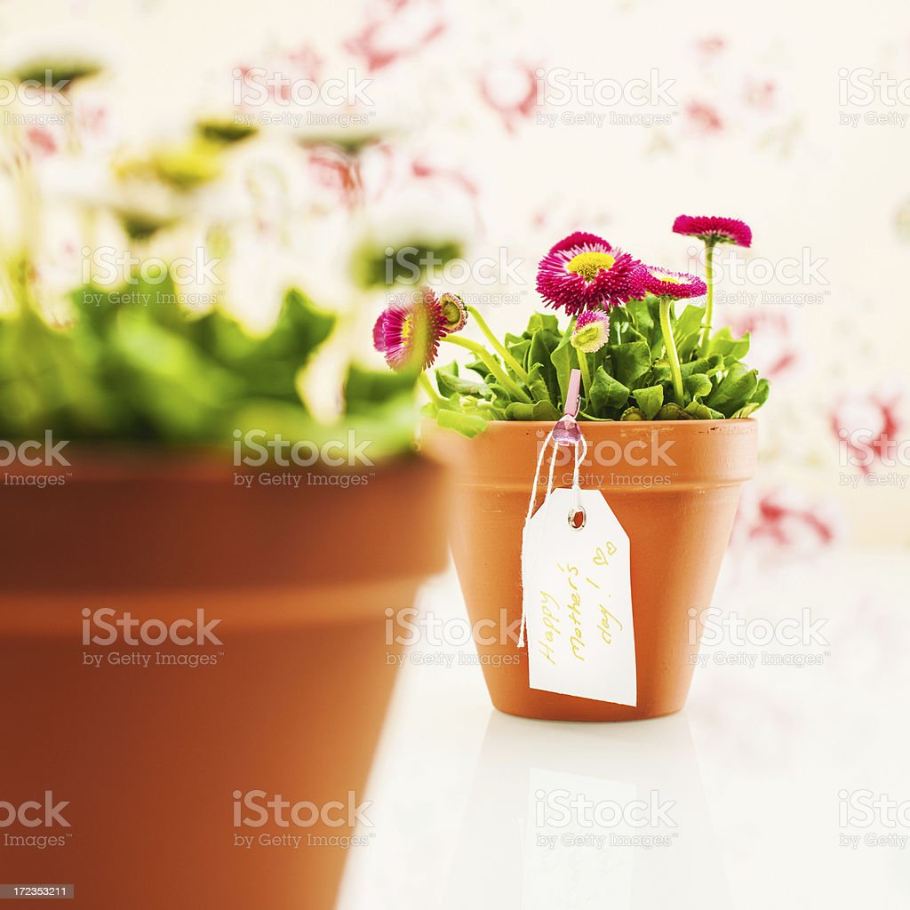 Happy mothers day potted plant royalty-free stock photo