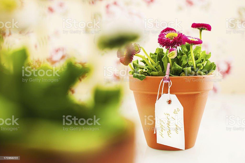 Feliz día de la madre planta de tiesto foto de stock libre de derechos