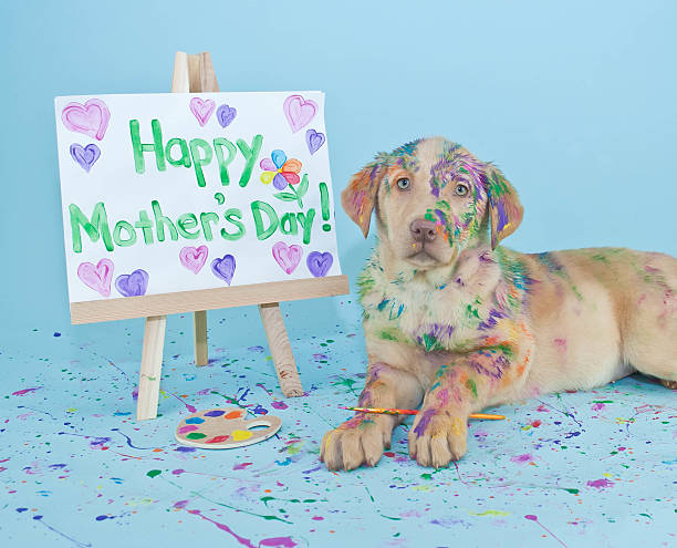 Happy Mother's Day Puppy stock photo