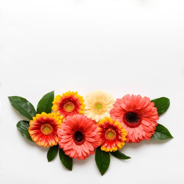 Schönen Muttertag, Frauen Tag, Valentinstag oder Geburtstag lebenden Korallen Pantone Farbe Hintergrund. Korallen flach legen Grußkartenvorlage mit wunderschönen Gerbera Blumen. – Foto