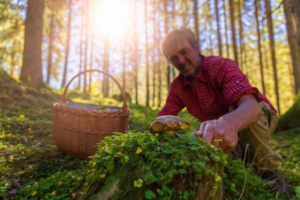 glad svamp plockare i skogen höst är framgångsrik - höst plocka svamp bildbanksfoton och bilder