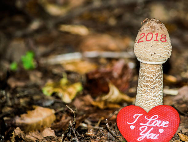 happy new year 2018 image. 2018 is growing up and bringing love. a conceptual abstract background photo of time, change, love, and healthy lifestyle concepts. - countdown stock photos and pictures