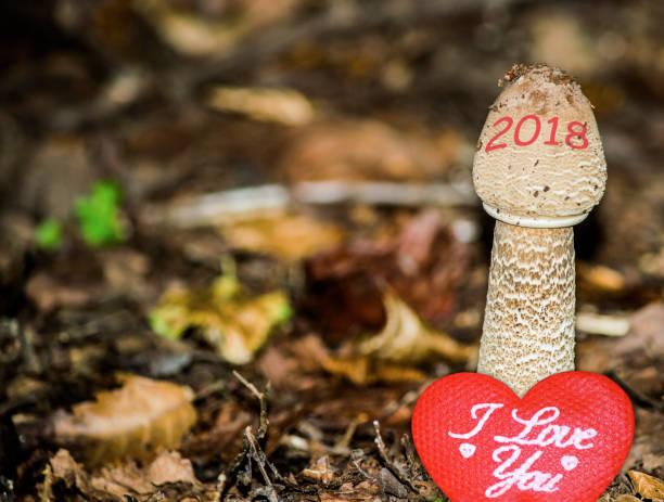 Feliz ano novo 2018 imagem. 2018 está crescendo e trazendo amor. Uma foto conceitual abstrato de tempo, mudança, amor e conceitos de estilo de vida saudável. - foto de acervo