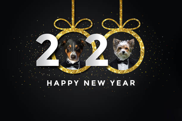 Happy new year 2020 picture id1140596796?b=1&k=6&m=1140596796&s=612x612&w=0&h=t0swcvkkqjkphlel6baab8umgirgorexn6scl4oghls=