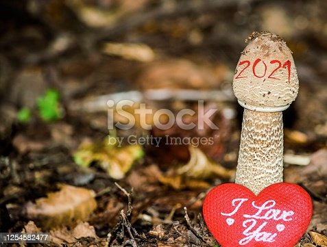 The new year of 2021 is growing up from the ground and bringing up love. A conceptual abstract background photo of time change, giving and receiving love, and healthy and energetic lifestyle concepts