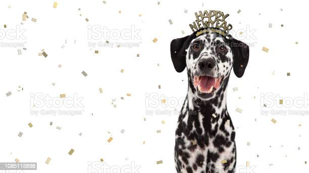 Happy new year celebration dalmatian dog picture id1085115898?b=1&k=6&m=1085115898&s=612x612&h=qwuodgkplwbjsweuxztrm52asffrcxbof7 bosiabaq=