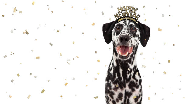 Happy New Year Celebration Dalmatian Dog stock photo