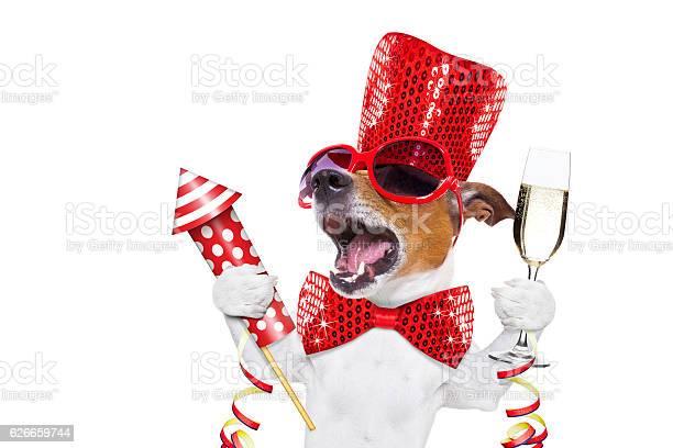 Happy new year dog celberation picture id626659744?b=1&k=6&m=626659744&s=612x612&h=naeens4muc tkzty4nxfnhdyuxymtkkohd39wo7svug=