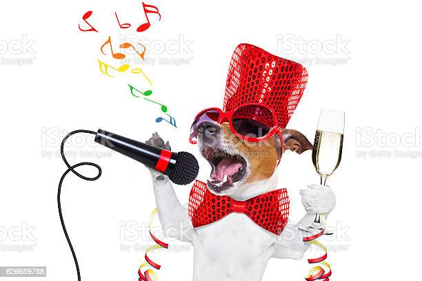 Happy new year dog celberation picture id626659788?b=1&k=6&m=626659788&s=612x612&h=mf8p xoc y53hkmsrj7hua t vhdgw6grr2xh kdame=