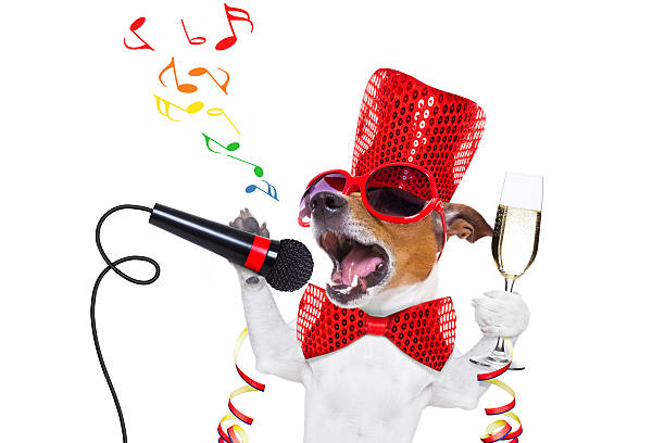 happy new year dog celberation - silvester mit hund stock-fotos und bilder