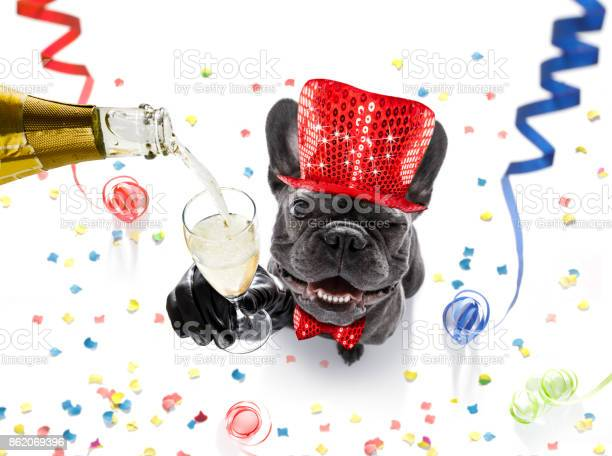 Happy new year dog celberation picture id862069396?b=1&k=6&m=862069396&s=612x612&h=9mx3lb4ss0bouytuuxbnoa7rovxaanva4cg49pn3kbq=