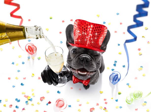 frohes neues jahr hund celberation - coole liebessprüche stock-fotos und bilder