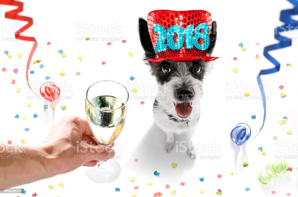 happy new year dog celberation stock photo