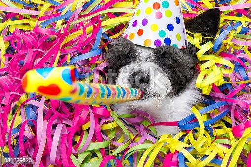 istock happy new year dog celberation 881229520