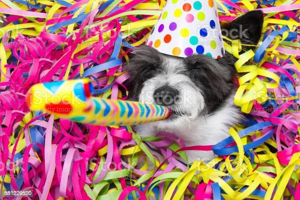 Happy new year dog celberation picture id881229520?b=1&k=6&m=881229520&s=612x612&h=hwhn1vnov5ozsouql zrbtdoaxmad640k8ll m nwsg=
