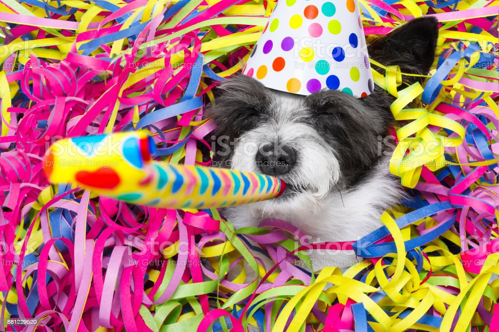 happy new year dog celberation - foto stock