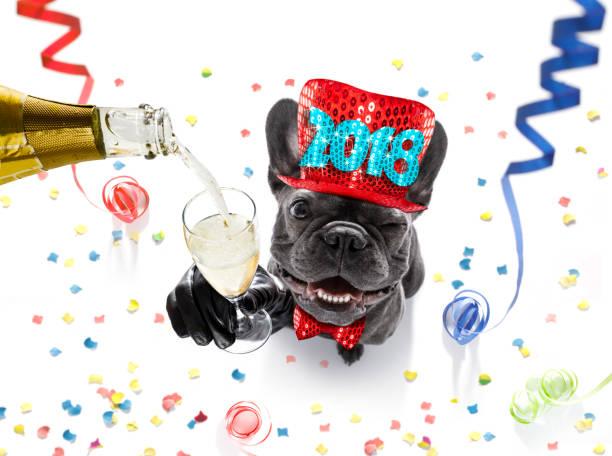 frohes neues jahr hund feier - silvester mit hund stock-fotos und bilder