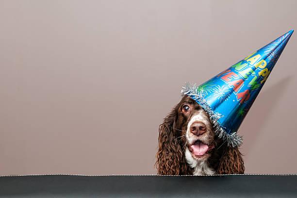 frohes neues jahr-hund - silvester mit hund stock-fotos und bilder