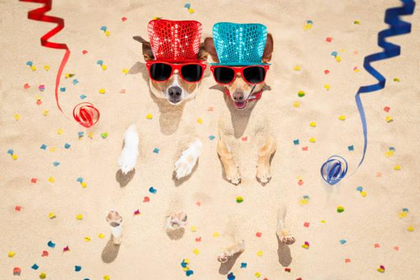 frohes neues jahr hunde am strand - silvester mit hund stock-fotos und bilder