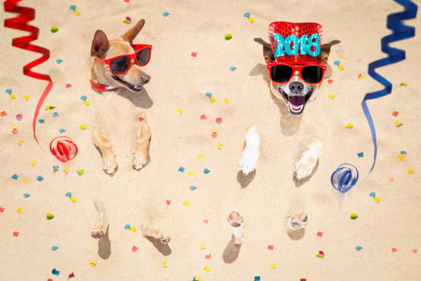 happy new year dogs at the beach stock photo