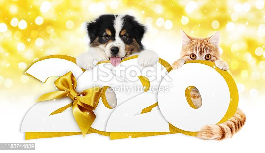 istock 2020 happy new year number text, dog puppy and cat pet with golden christmas ribbon bow isolated on golden blurred lights background 1183744839