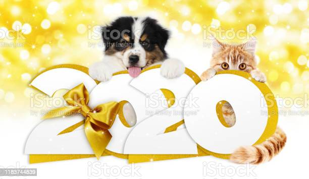 Happy new year number text dog puppy and cat pet with golden ribbon picture id1183744839?b=1&k=6&m=1183744839&s=612x612&h=a2rmpo0w1ffflhhap4vatkkopku4ac8bhnticdbmp3w=