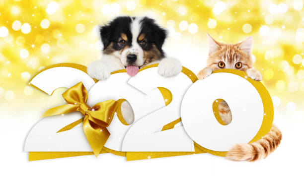 Happy new year number text dog puppy and cat pet with golden ribbon picture id1183744839?b=1&k=6&m=1183744839&s=612x612&w=0&h=wahzsz395e9 tjivh8d8wfkloecmf5ldbjqf1nxlagy=