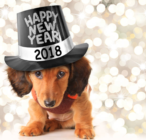 glückliches neues jahr welpen 2018 - silvester mit hund stock-fotos und bilder