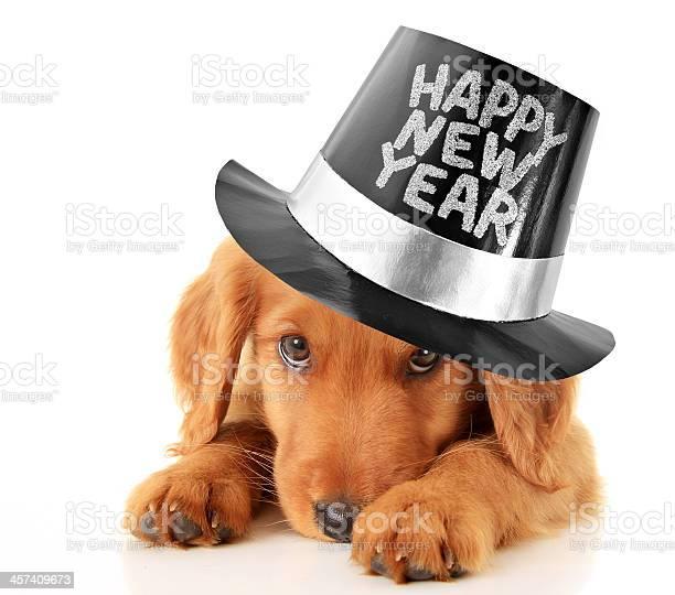 Happy new year puppy picture id457409673?b=1&k=6&m=457409673&s=612x612&h= r5c7byanz9serrv8jkau5fnjltqyfsa3me7xwyqcic=