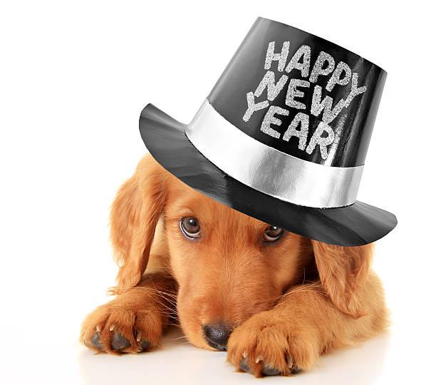 Happy new year puppy picture id457409673?b=1&k=6&m=457409673&s=612x612&w=0&h=hyw7vcypzowfbbfxh8i nza4sabzqq4mzcg1yxaaxau=