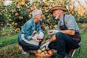 Senior couple with homegrown apples outdoors