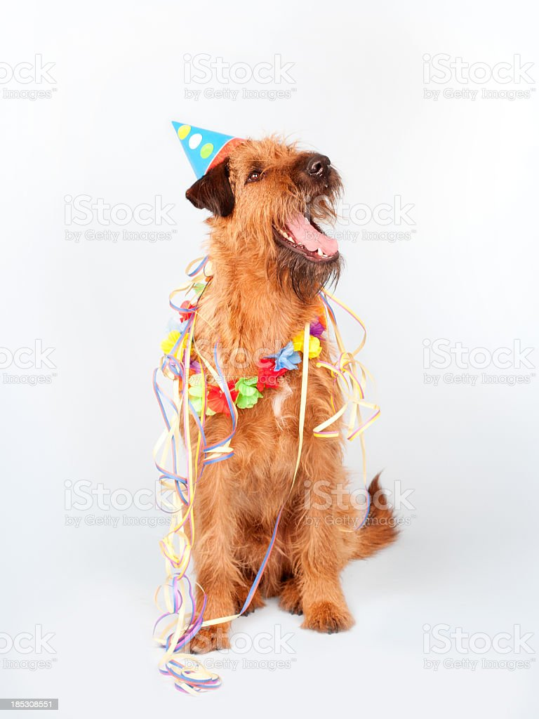 Happy Party Dog royalty-free stock photo