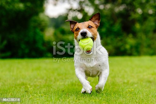 Summer fun with domestic dog