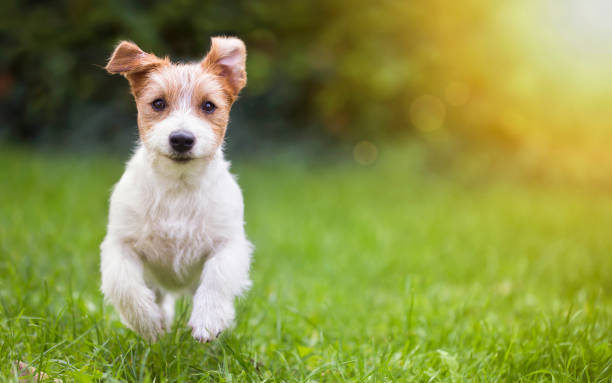 301,885 Happy Puppies Stock Photos, Pictures & Royalty-Free Images - iStock