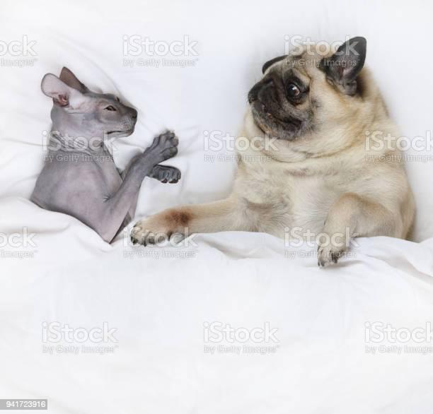 Happy pet family picture id941723916?b=1&k=6&m=941723916&s=612x612&h=0ai5qdjgbkedhtaocy28jdjqfauq8j8 taezy0comug=