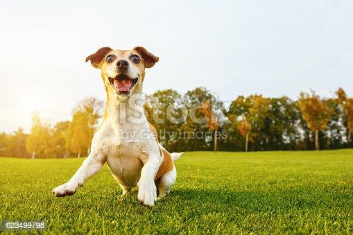 istock Happy playfull dog 623499798