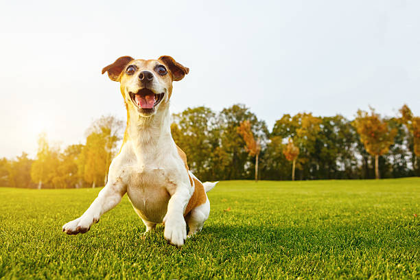 Happy playfull dog - Photo