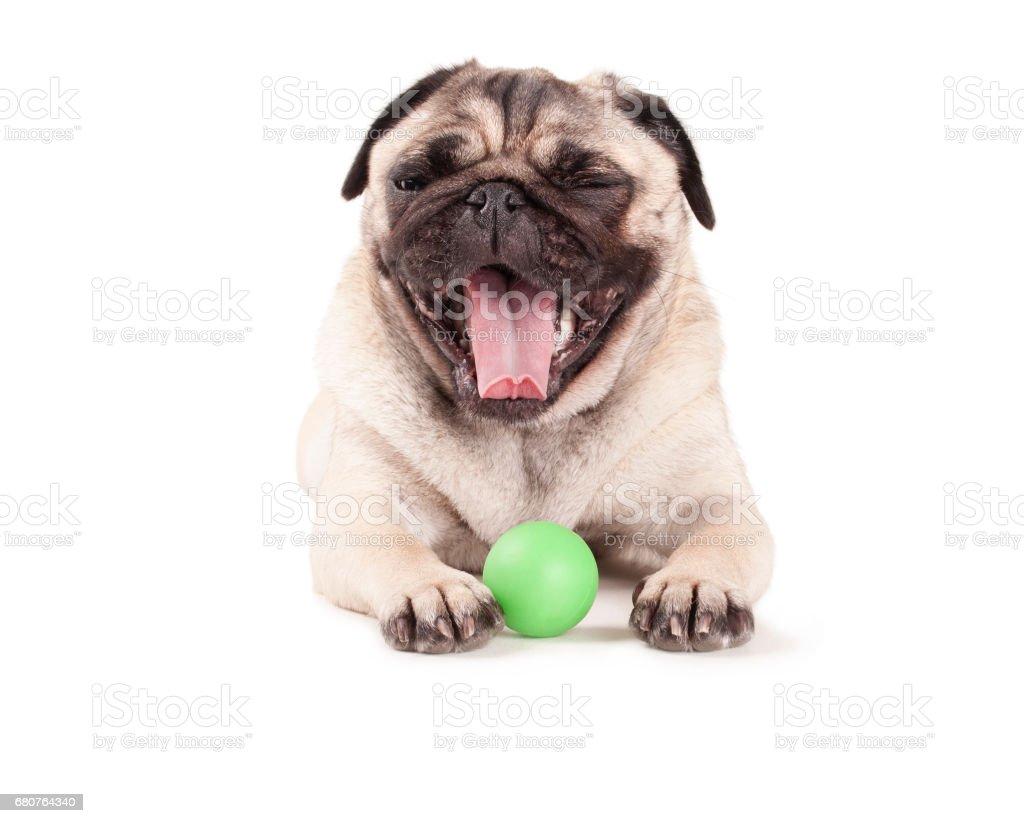 Gelukkig pug puppy hondje met groene bal spelen en geeuwen, geïsoleerd op witte achtergrond foto